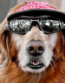 A Florida dawg needs to look cool as well as to protect his eyes from the bright sun.
