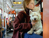 Dogs are often passengers on public transportation in Paris.