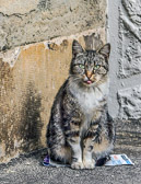 Another cats that lives on the streets Rieux Minervois, France.