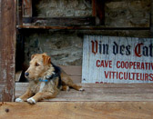 A proud guardian of the wine at a cave in the perched city of Minerve.