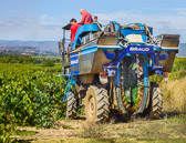 Riding a machine to harvest the grapes is now more common than hand picking.