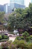A beautiful oasis along Nathan Road on a walk to Hong Kong Harbor.