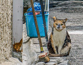 The villages of France are populated with many cats who are living on the streets.