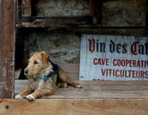 A wine cave in the village of Minerve in southwestern France.