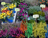 The beautiful flowers at the market are a delight to see and smell.