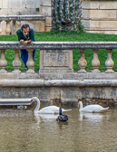 He comes every day to feed them at the Jardins de la Fontaine in Nimes.