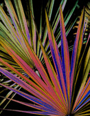 Palm leaves patterns transformed into a colorful abstraction.