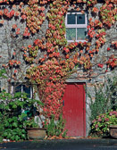 Colorful foliage on this home reminds us that it is October in spite of all the greeness of Ireland.