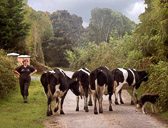 When traveling by car on the narrow roads in the Irish country side there are often delays such as this.