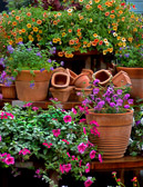 Terra cotta pots and colorful flowers at the New York Bronx Botanical Garden.