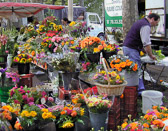The French love  flowers in their lives,  clearly evident by their many flower markets and florists.