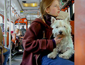 You will see many dogs riding the buses, trains and Metro in Paris.