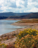 Wild flowers thrive in spite of a continuing Western drought.